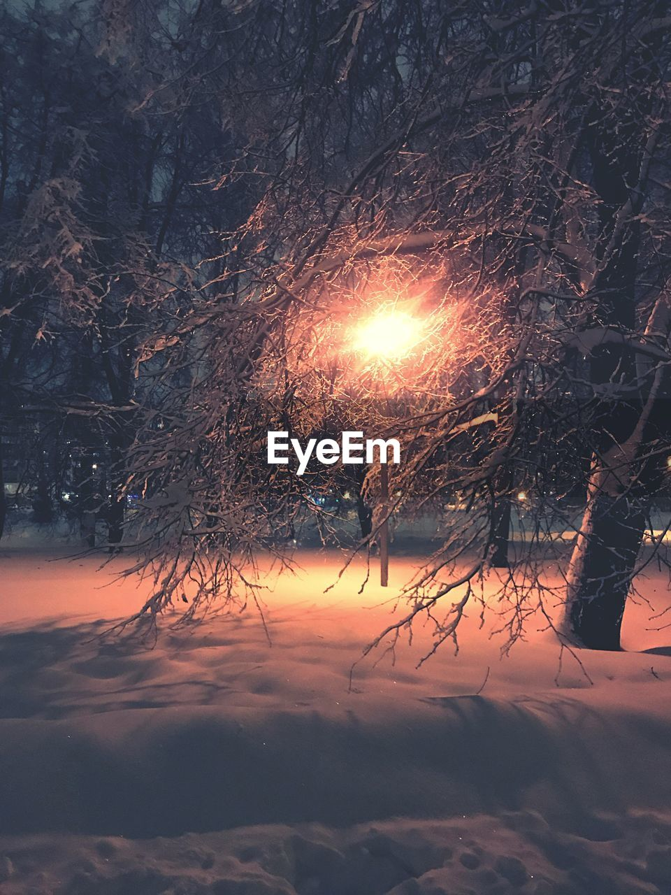 winter, cold temperature, snow, nature, cold, tranquility, frozen, sun, ice, beauty in nature, weather, outdoors, no people, tranquil scene, tree, sunset, bare tree, scenics, landscape, branch, sky