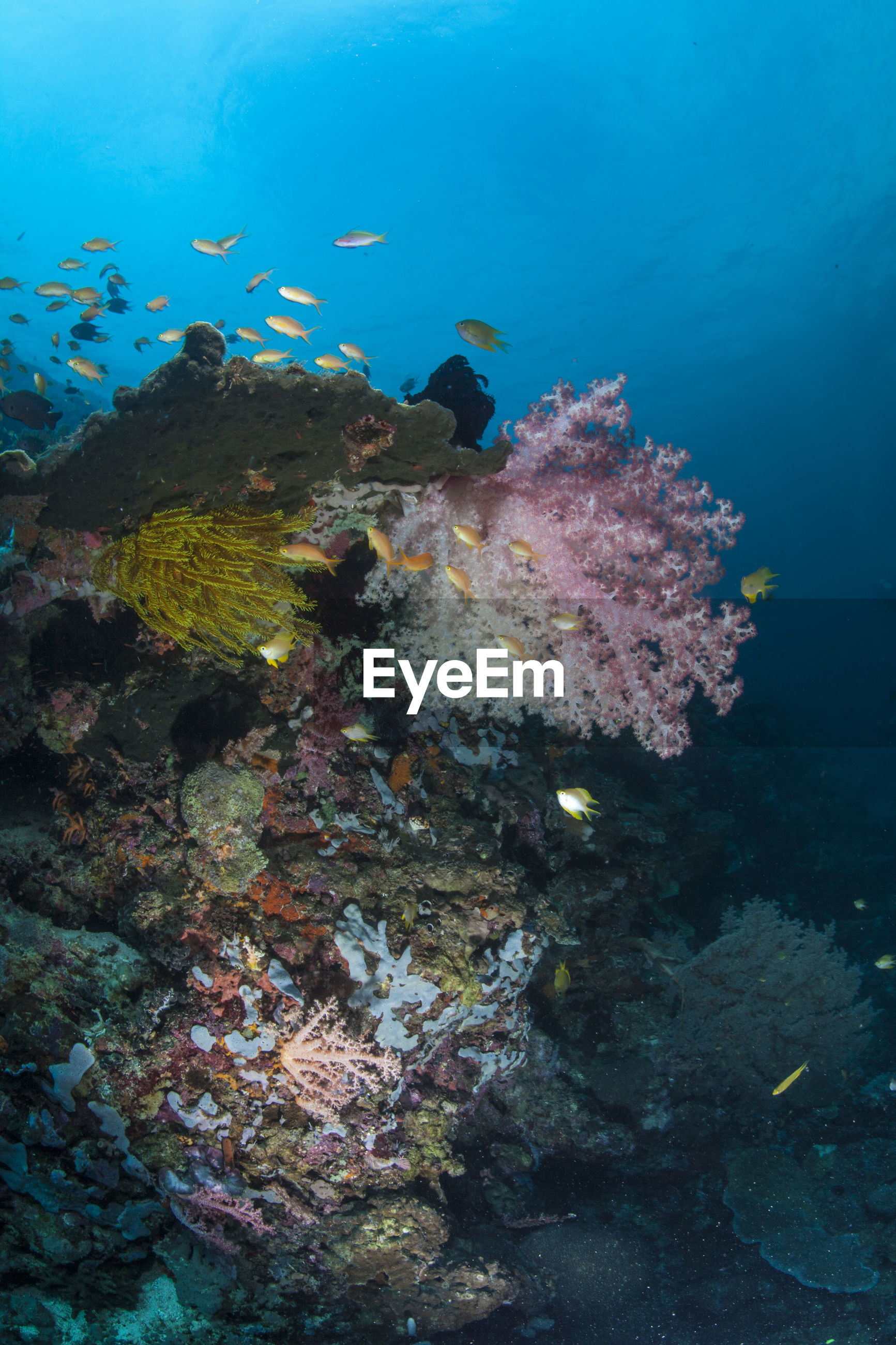 Scenic view of fishes swimming underwater