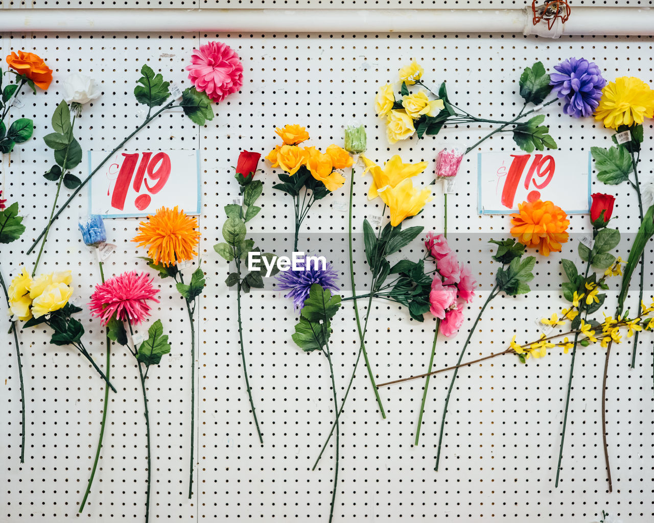 View of multi colored flowers on white color wall