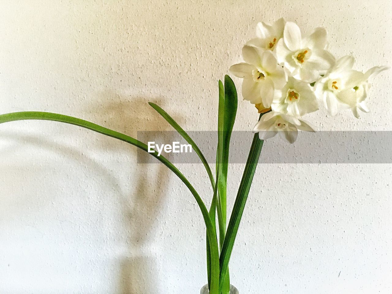 flower, flower head, petal, white color, growth, fragility, freshness, beauty in nature, vase, green color, nature, springtime, no people, close-up, plant, indoors, day