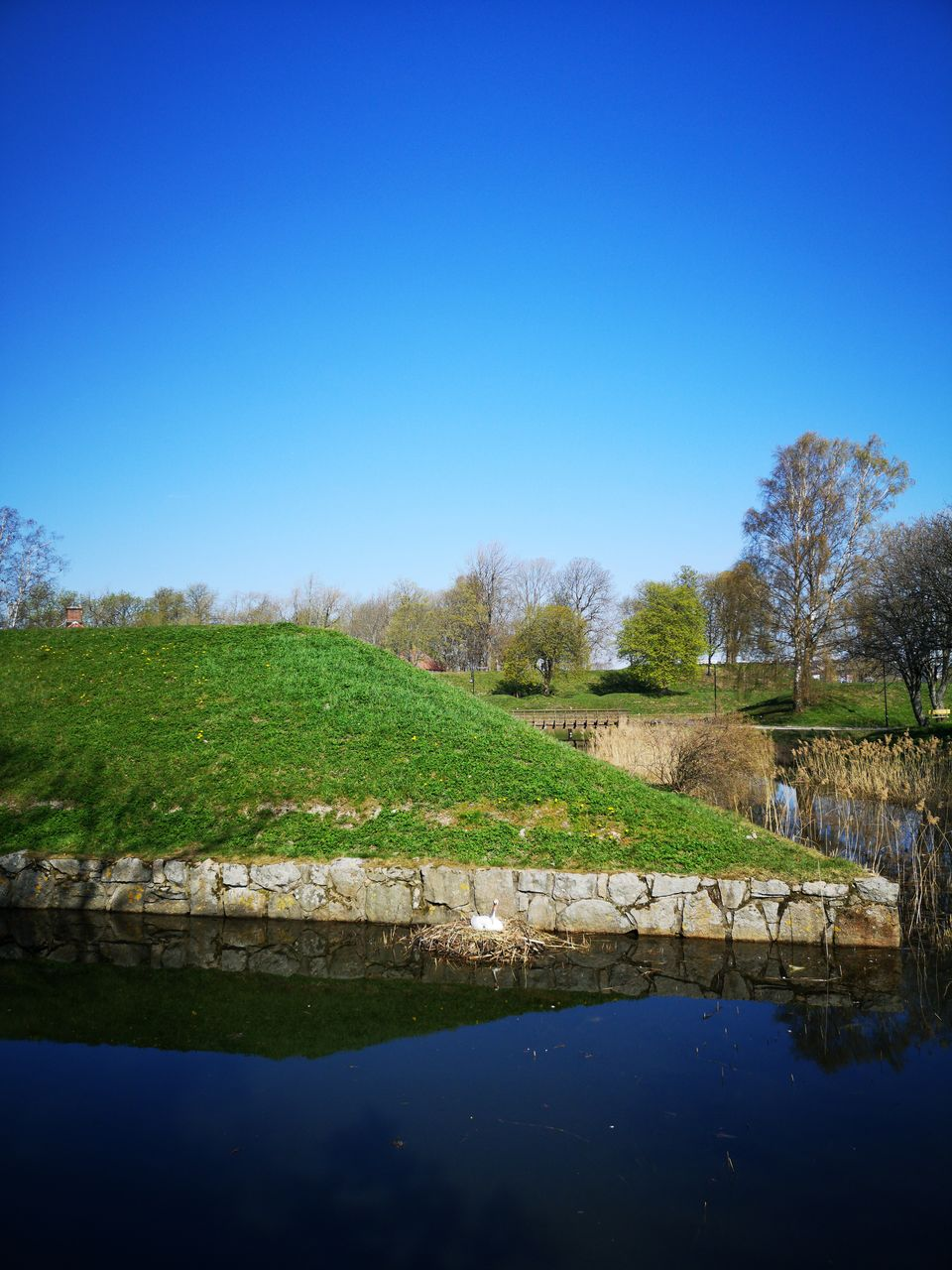 sky, water, plant, copy space, tranquility, tranquil scene, nature, reflection, tree, landscape, clear sky, scenics - nature, lake, blue, beauty in nature, day, grass, no people, green color, outdoors