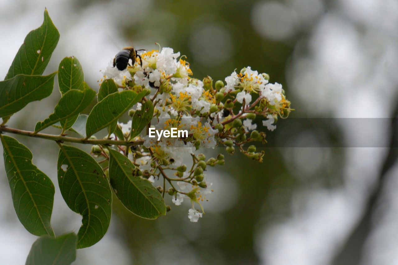flower, one animal, insect, growth, white color, nature, fragility, animal themes, day, no people, beauty in nature, leaf, plant, outdoors, animals in the wild, freshness, close-up, tree, flower head