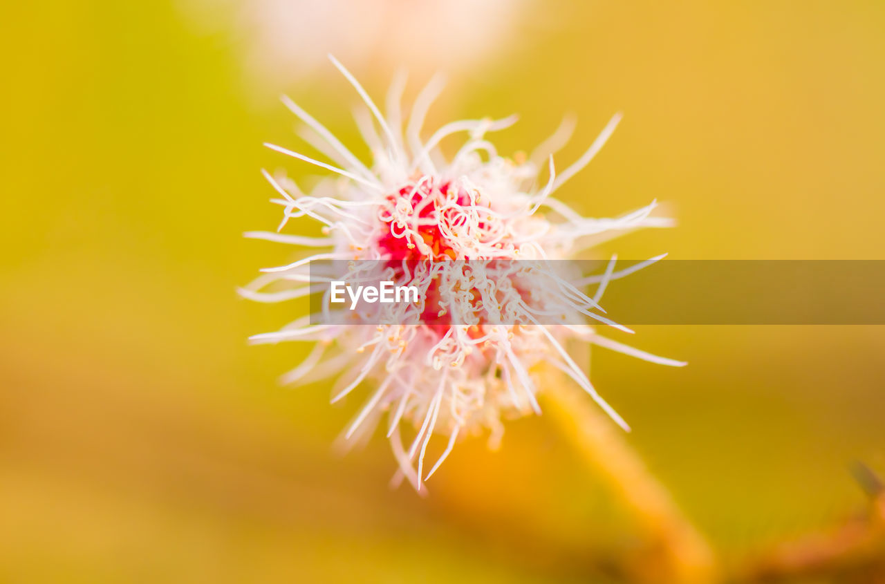 flower, close-up, flowering plant, beauty in nature, fragility, vulnerability, plant, freshness, growth, petal, flower head, inflorescence, no people, nature, selective focus, pollen, outdoors, day, focus on foreground