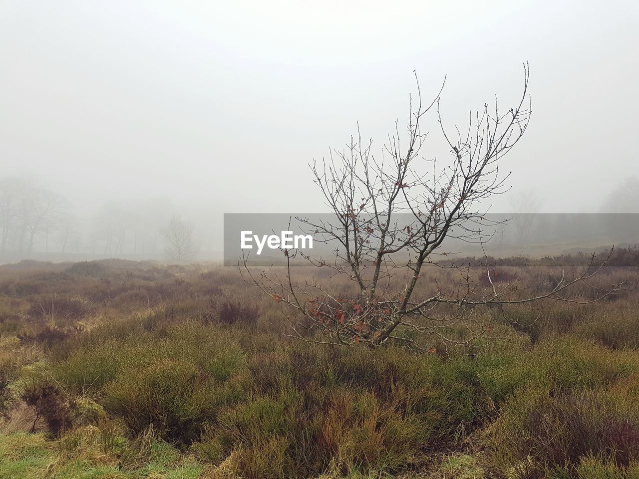 landscape, tranquility, tranquil scene, nature, bare tree, beauty in nature, non-urban scene, scenics, no people, outdoors, tree, fog, day, grass, branch, sky