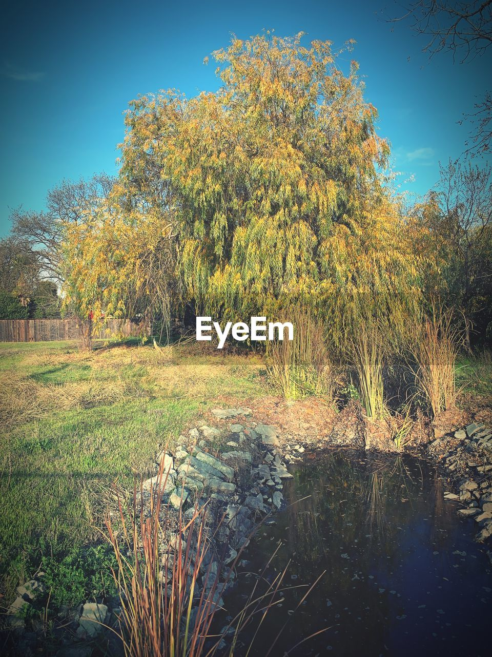 plant, sky, tree, beauty in nature, tranquility, tranquil scene, growth, nature, scenics - nature, no people, day, land, environment, grass, field, landscape, non-urban scene, water, outdoors