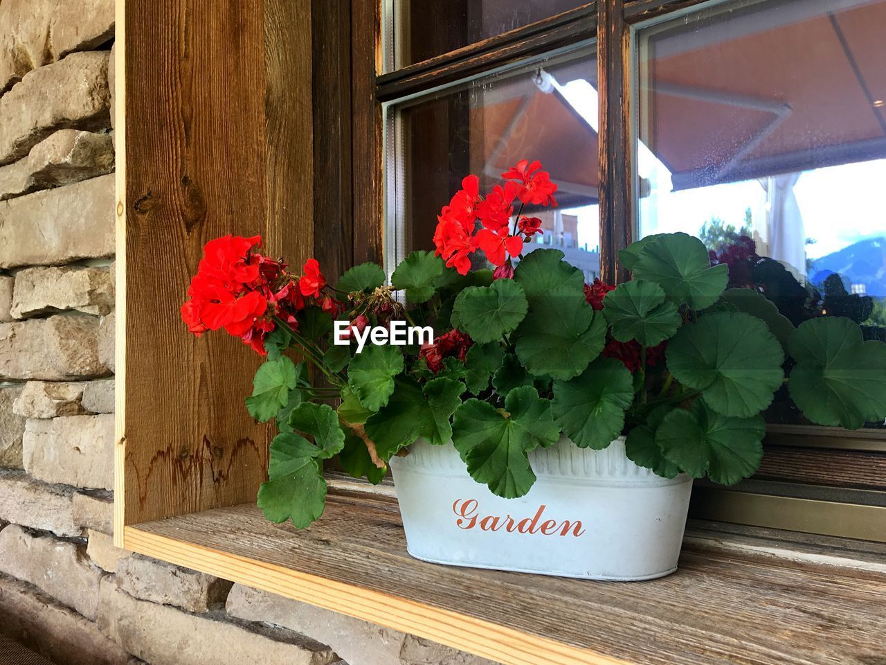 flowering plant, flower, plant, freshness, growth, text, beauty in nature, potted plant, nature, fragility, vulnerability, no people, window, day, communication, plant part, close-up, leaf, western script, wood - material, outdoors, flower head, flower pot, window box