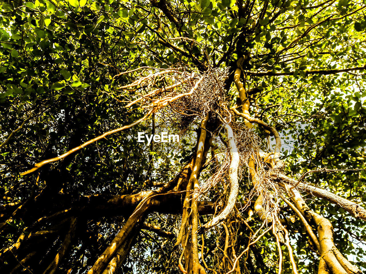 tree, nature, branch, no people, day, outdoors, forest, green color, tree trunk, one animal, growth, animal themes, reptile, beauty in nature, close-up