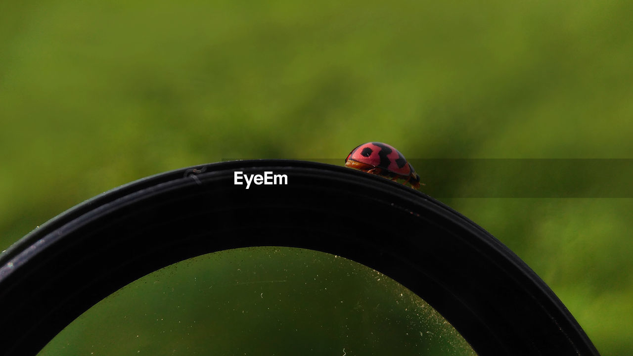 one animal, animal themes, animal wildlife, animals in the wild, animal, focus on foreground, green color, vertebrate, bird, no people, ladybug, close-up, invertebrate, nature, insect, beetle, day, plant, outdoors, grass, wheel