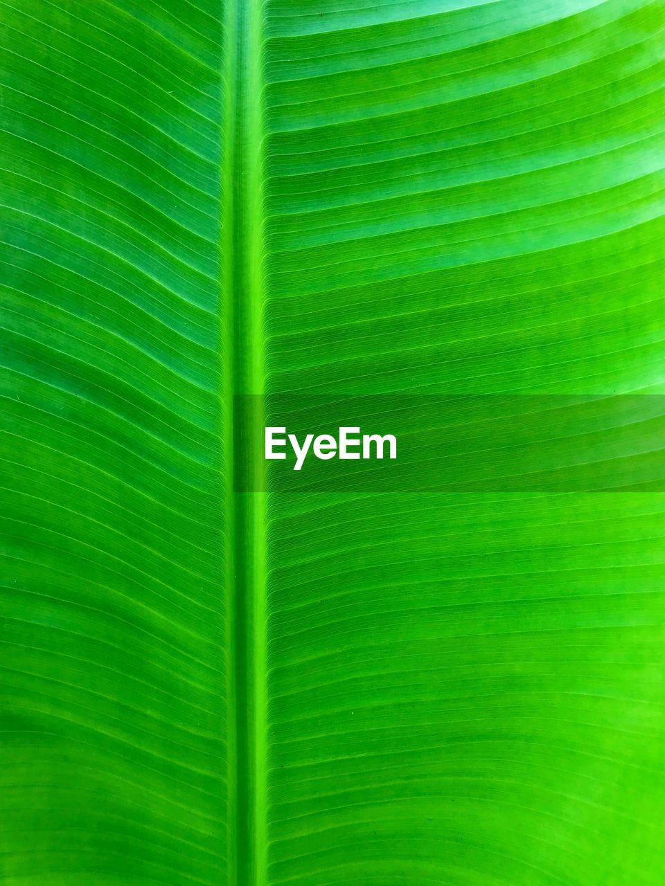 leaf, plant part, backgrounds, green color, full frame, pattern, no people, natural pattern, close-up, leaf vein, banana leaf, beauty in nature, nature, plant, leaves, textured, palm leaf, growth, vulnerability, fragility, outdoors, abstract backgrounds, textured effect
