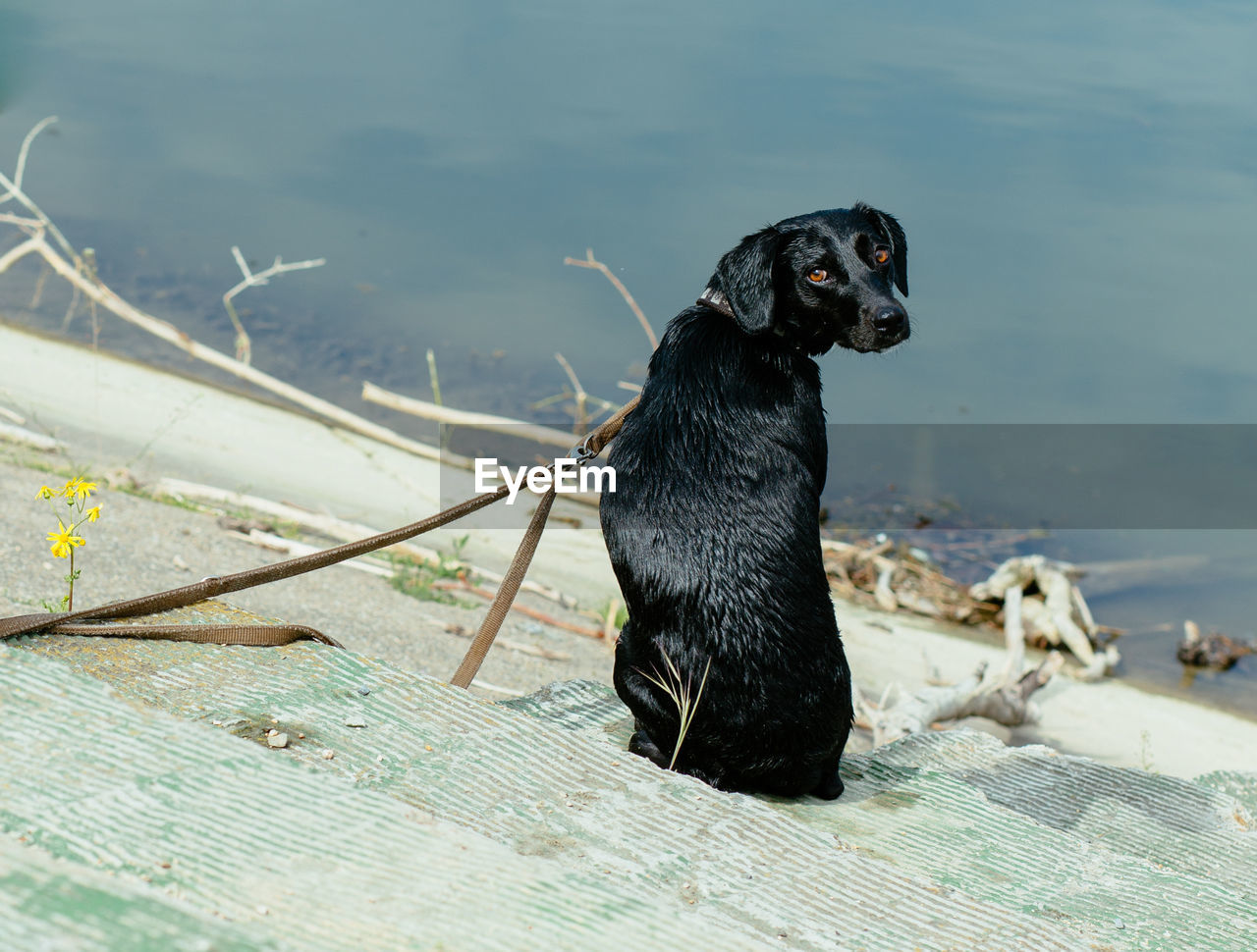 Portrait of dog against lake