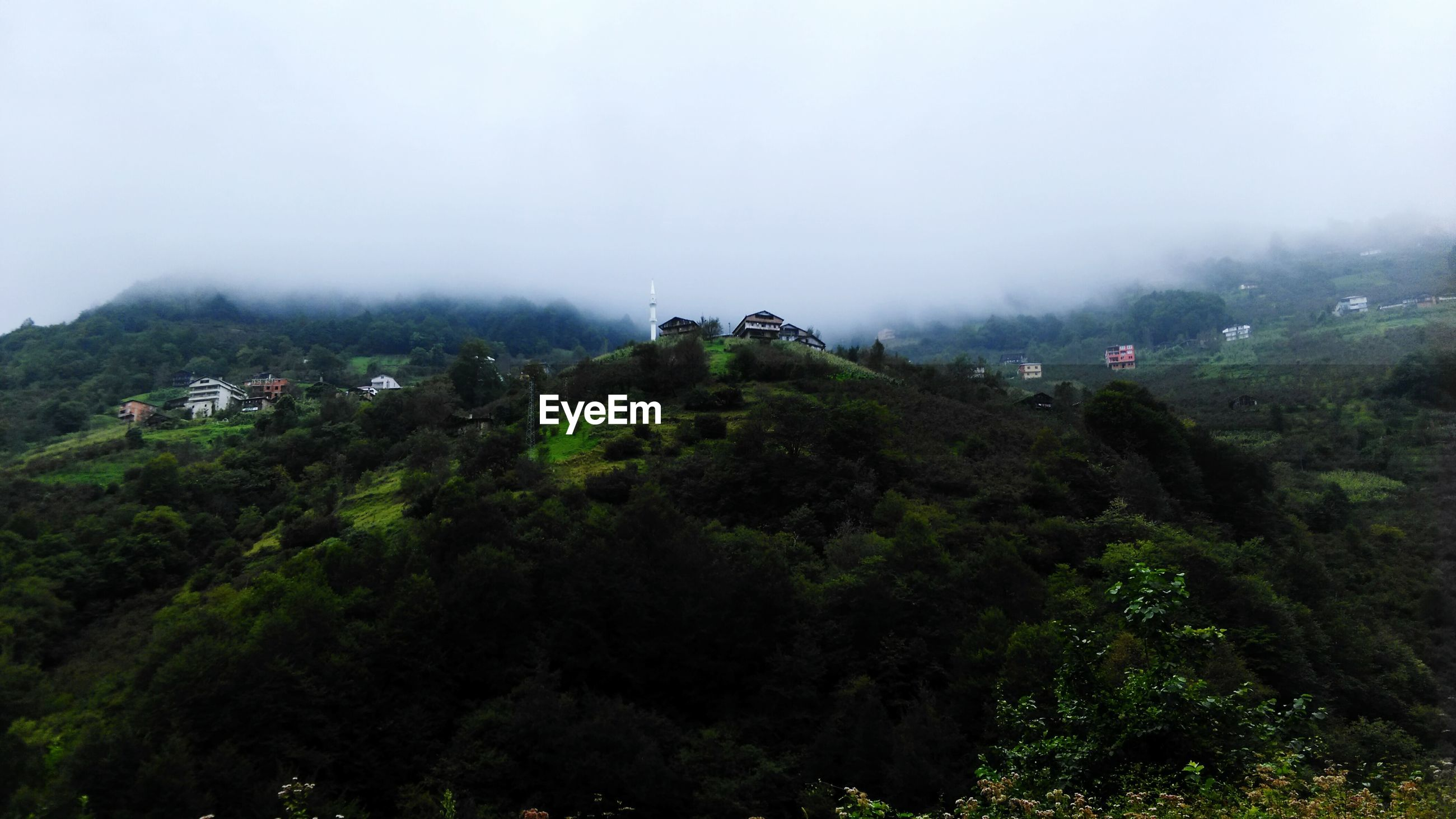 tree, fog, tranquil scene, tranquility, scenics, landscape, high angle view, mountain, beauty in nature, non-urban scene, weather, hill, nature, foggy, growth, travel destinations, green color, remote, tourism, lush foliage, valley, solitude, sky, outdoors, day, vacations, wide, ethereal, woodland