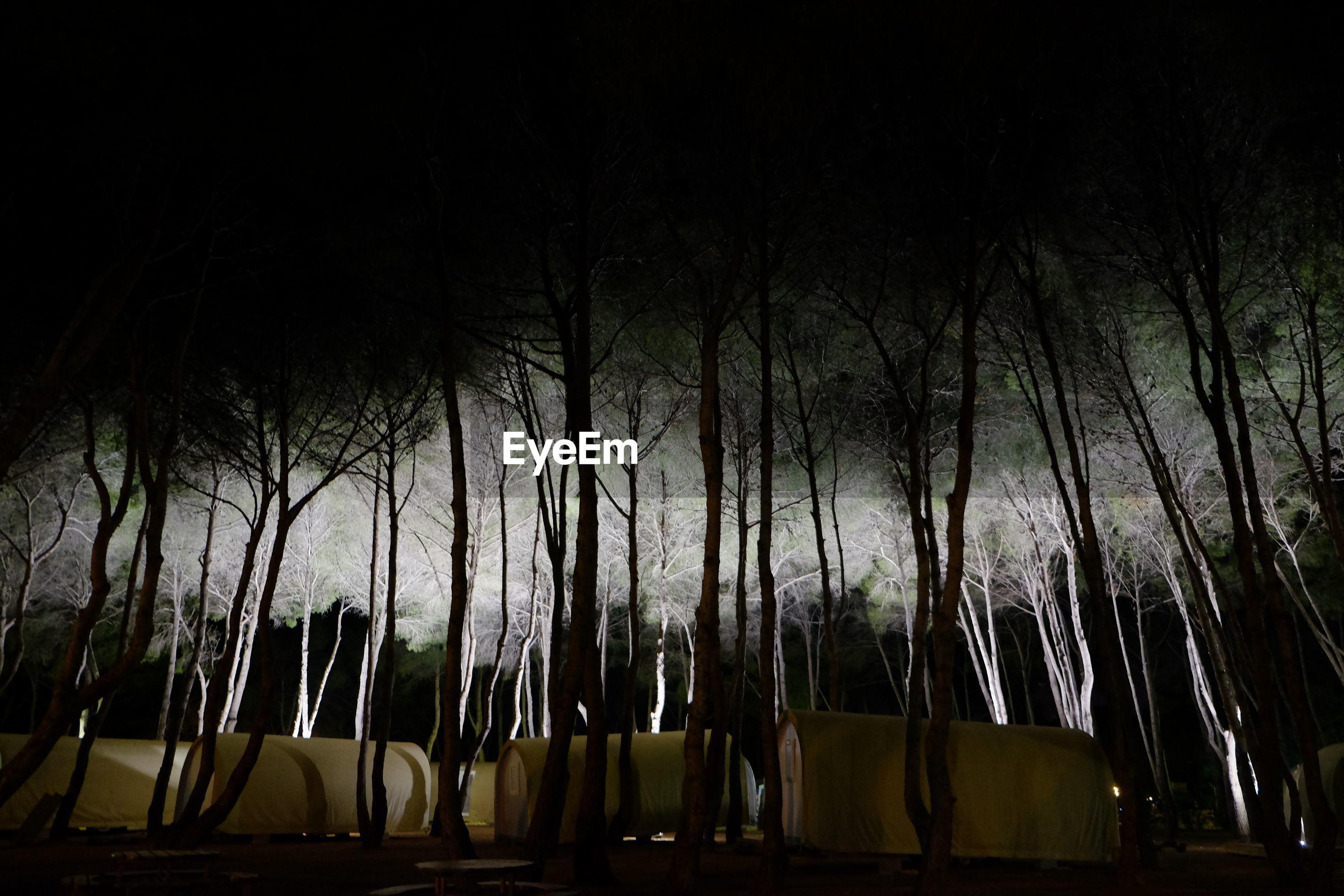 LOW ANGLE VIEW OF BAMBOO TREES AGAINST SKY AT NIGHT