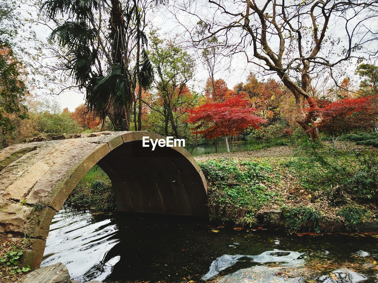 tree, autumn, bridge - man made structure, nature, growth, leaf, day, river, architecture, outdoors, connection, water, no people, forest, scenics, tranquility, beauty in nature, built structure, branch