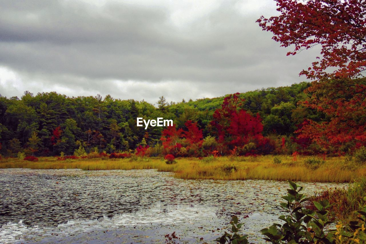 tree, nature, autumn, vegetation, flora, change, water, growth, sky, beauty in nature, tranquility, no people, scenics, landscape, scenery, forest, lake, outdoors, leaf, day