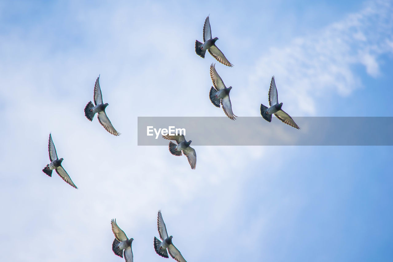 sky, group of animals, low angle view, flying, animal, animals in the wild, animal themes, animal wildlife, vertebrate, no people, bird, cloud - sky, day, spread wings, large group of animals, nature, mid-air, beauty in nature, motion, flock of birds