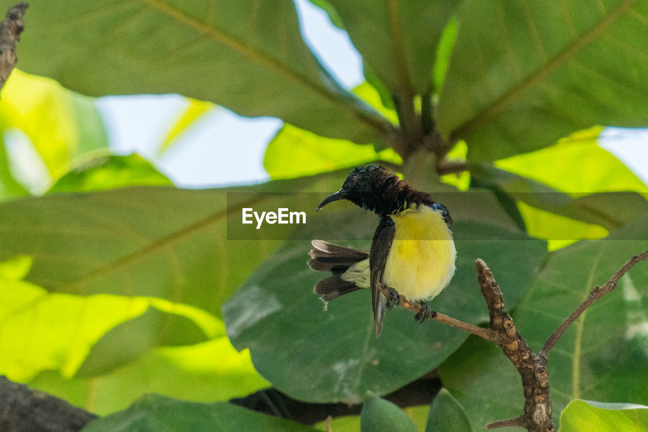 bird, plant part, animals in the wild, animal wildlife, animal themes, vertebrate, leaf, animal, perching, plant, day, nature, green color, branch, tree, no people, great tit, one animal, focus on foreground, outdoors
