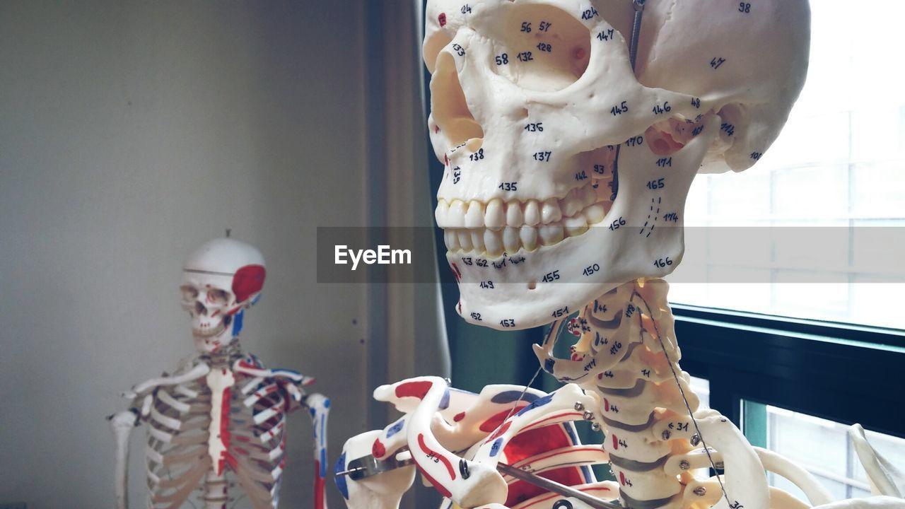 Human skeletons in classroom