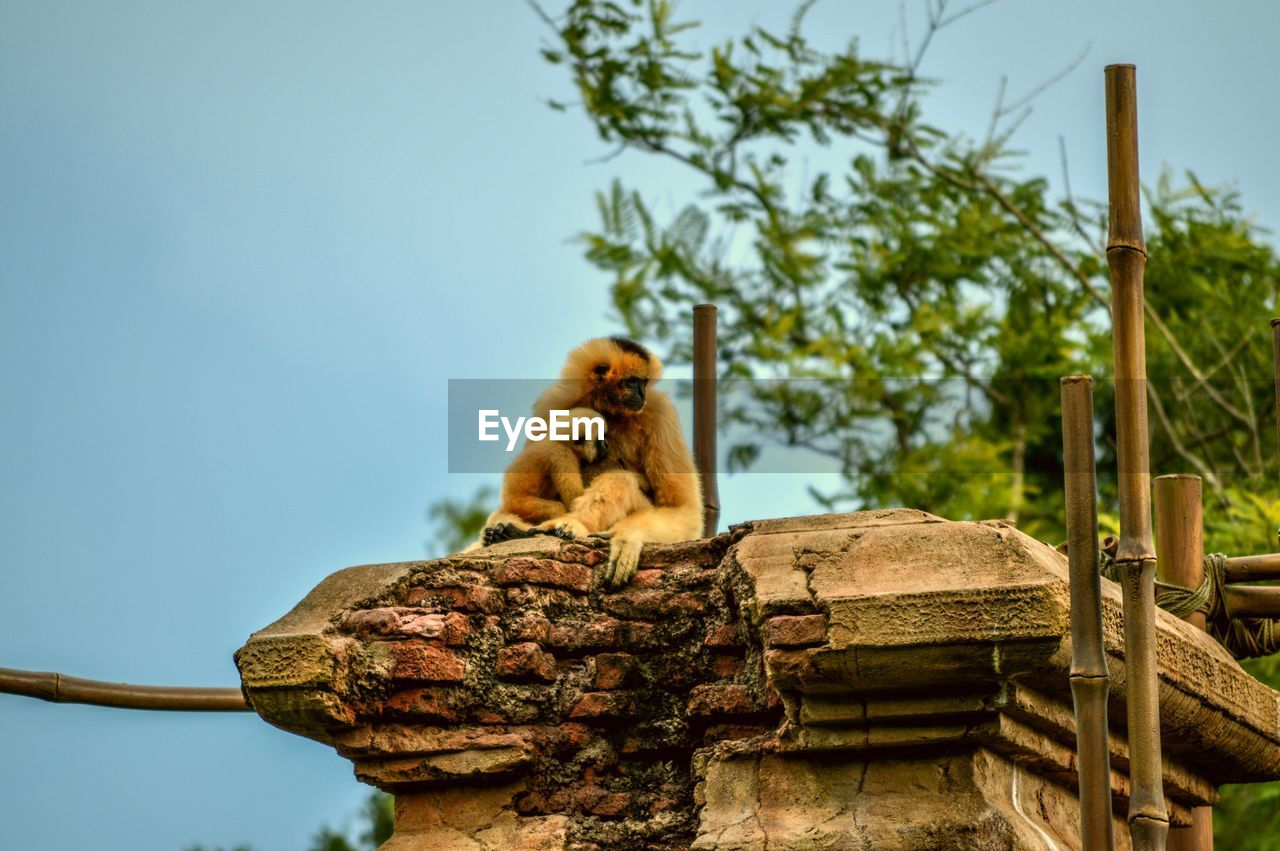 Low Angle View Of Monkey On Built Structure Against Sky