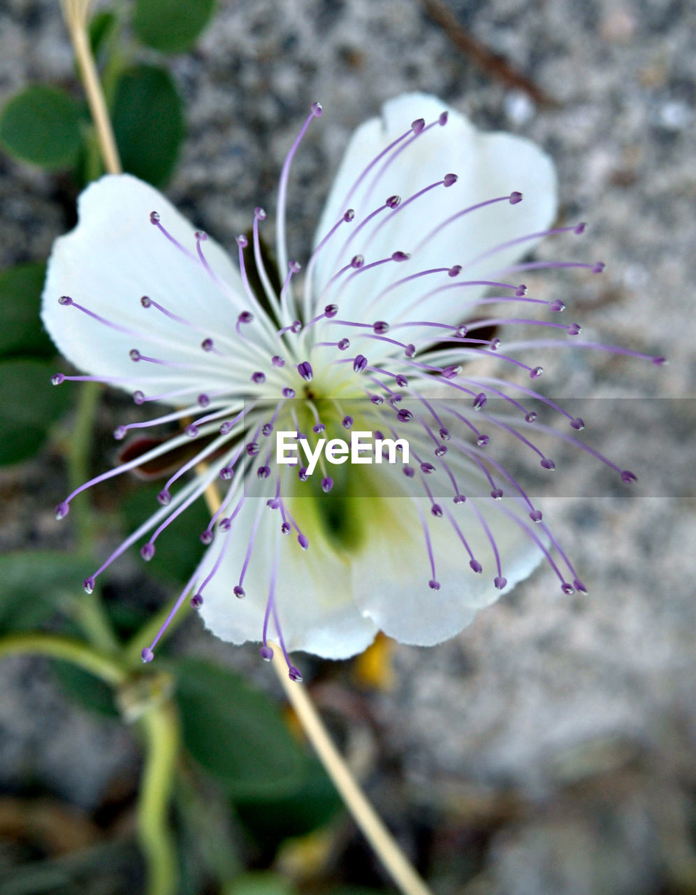 flower, nature, growth, beauty in nature, fragility, petal, plant, freshness, blossom, close-up, no people, outdoors, flower head, day, blooming