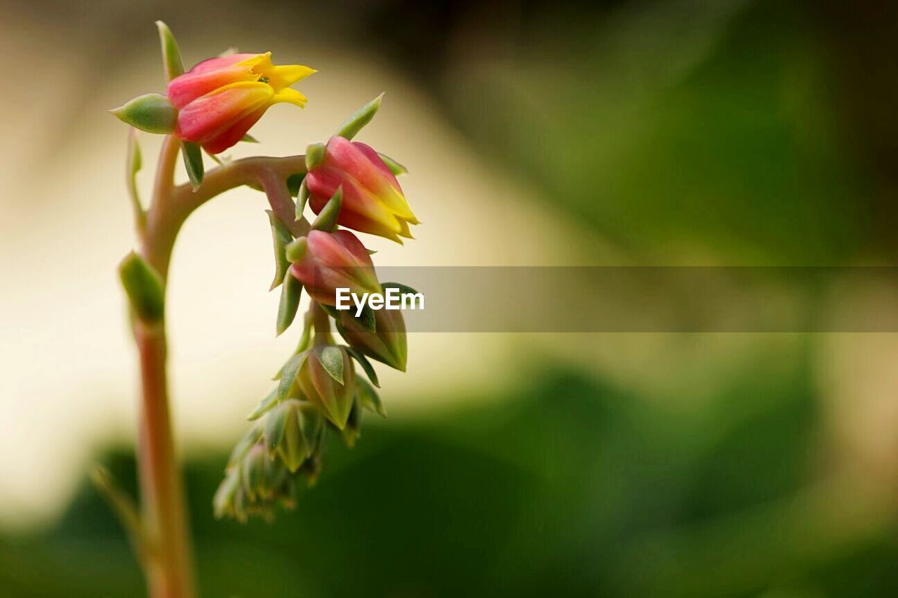flower, growth, nature, petal, plant, fragility, freshness, beauty in nature, no people, flower head, close-up, green color, leaf, outdoors, blooming, day
