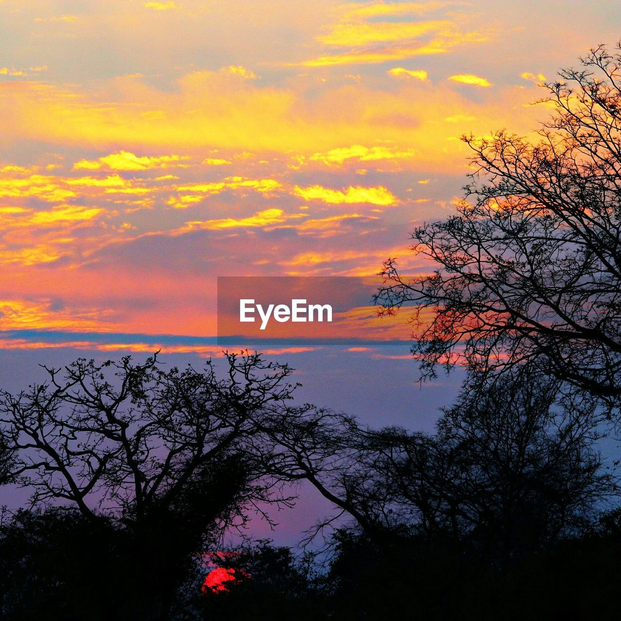 sunset, beauty in nature, tree, nature, sky, scenics, orange color, tranquility, tranquil scene, silhouette, no people, outdoors, cloud - sky, water, day