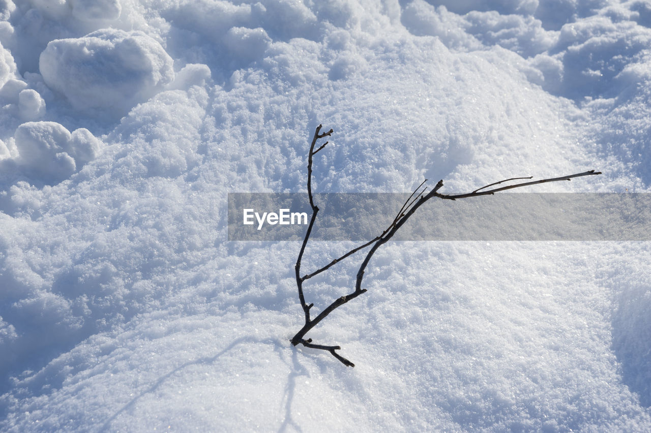 High Angle View Of Wilted Plant On Snow Covered Field