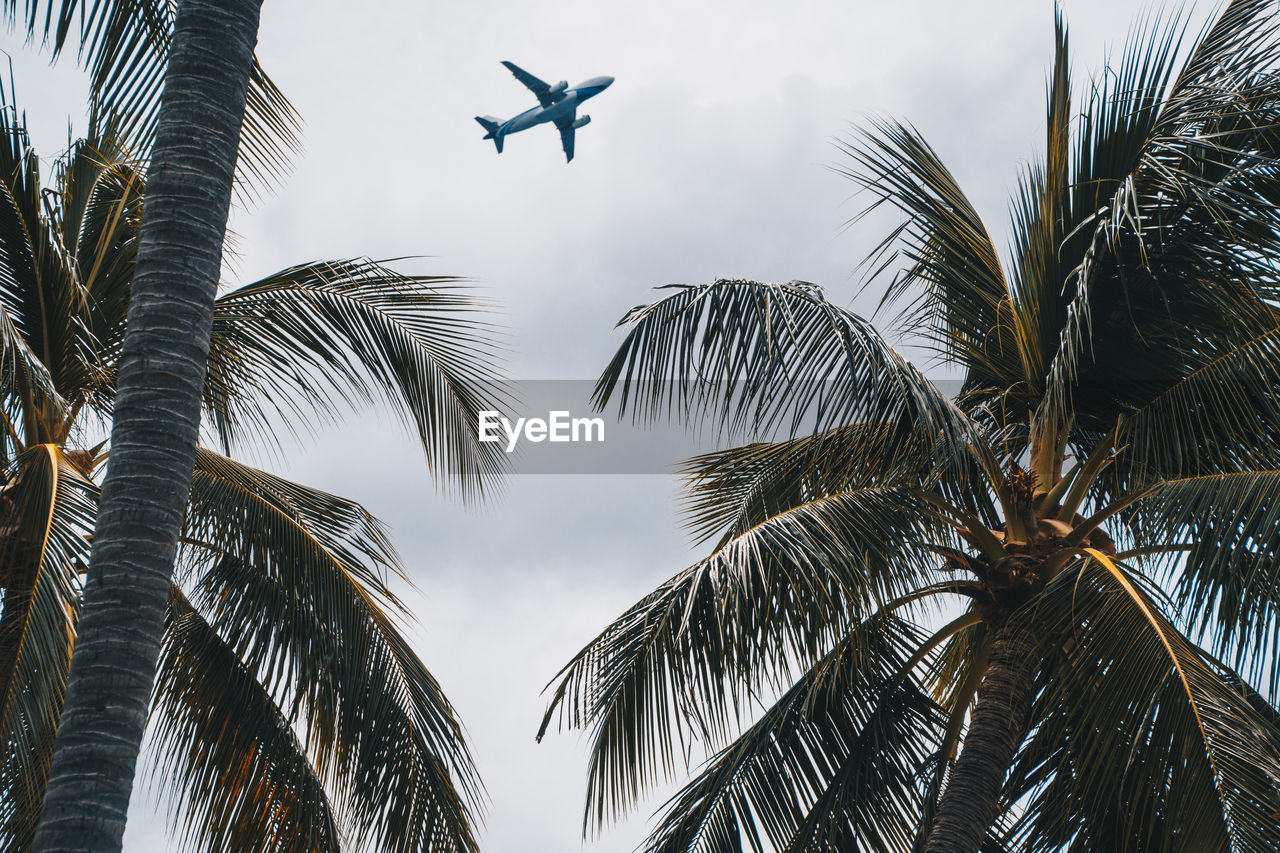 Low Angle View Of Palm Trees And Airplane Against Sky