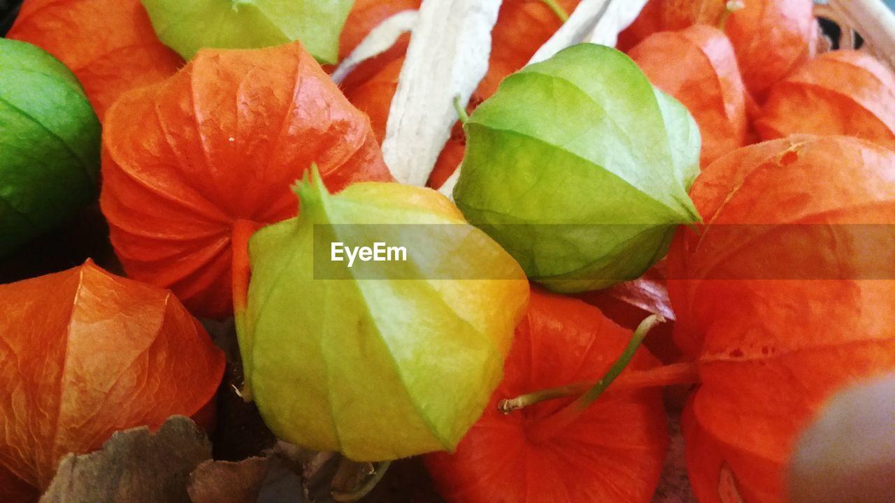 fruit, orange color, orange - fruit, leaf, freshness, healthy eating, food and drink, close-up, food, citrus fruit, no people, nature, day, outdoors