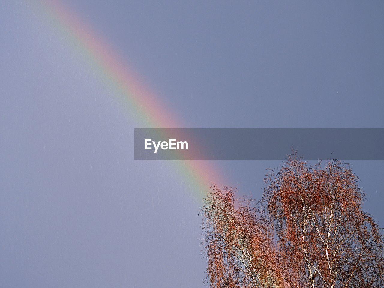 rainbow, multi colored, double rainbow, tree, nature, low angle view, day, outdoors, beauty in nature, no people, tranquility, clear sky, scenics, tranquil scene, spectrum, sky
