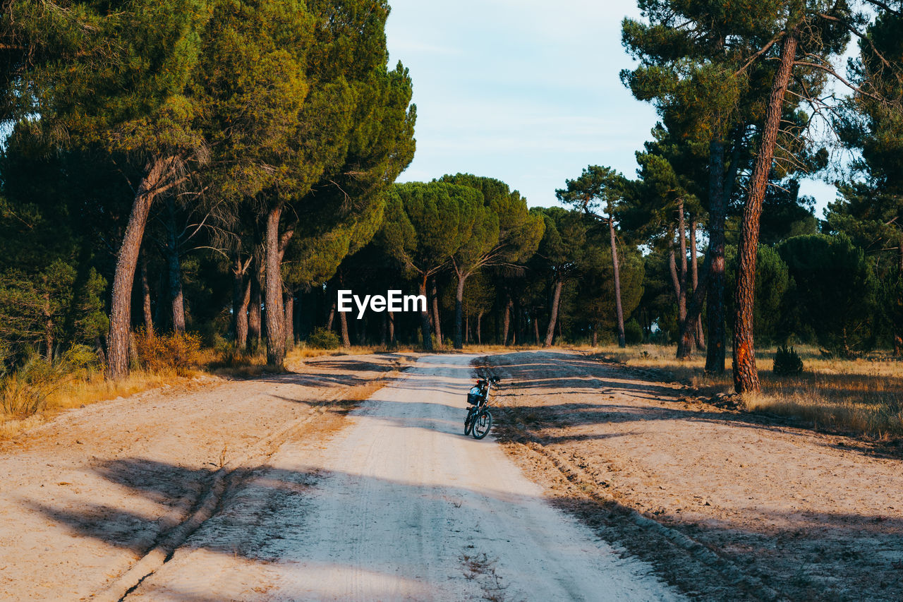 Green bicycle route with pine tree landscape