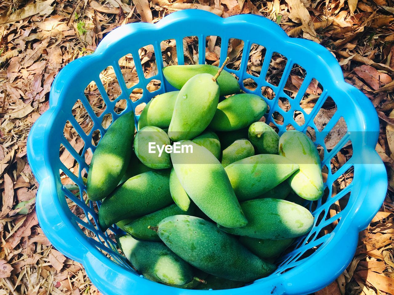 container, food, basket, high angle view, healthy eating, food and drink, green color, day, freshness, fruit, land, no people, wellbeing, nature, blue, bucket, large group of objects, field, still life, close-up, turquoise colored