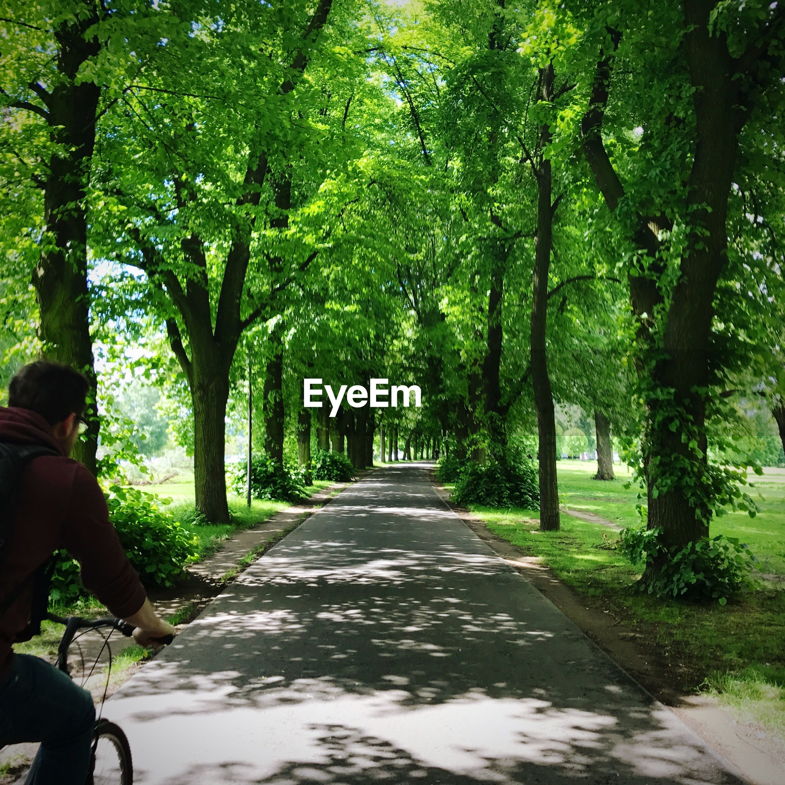 Rear view of man cycling on footpath amidst trees at park