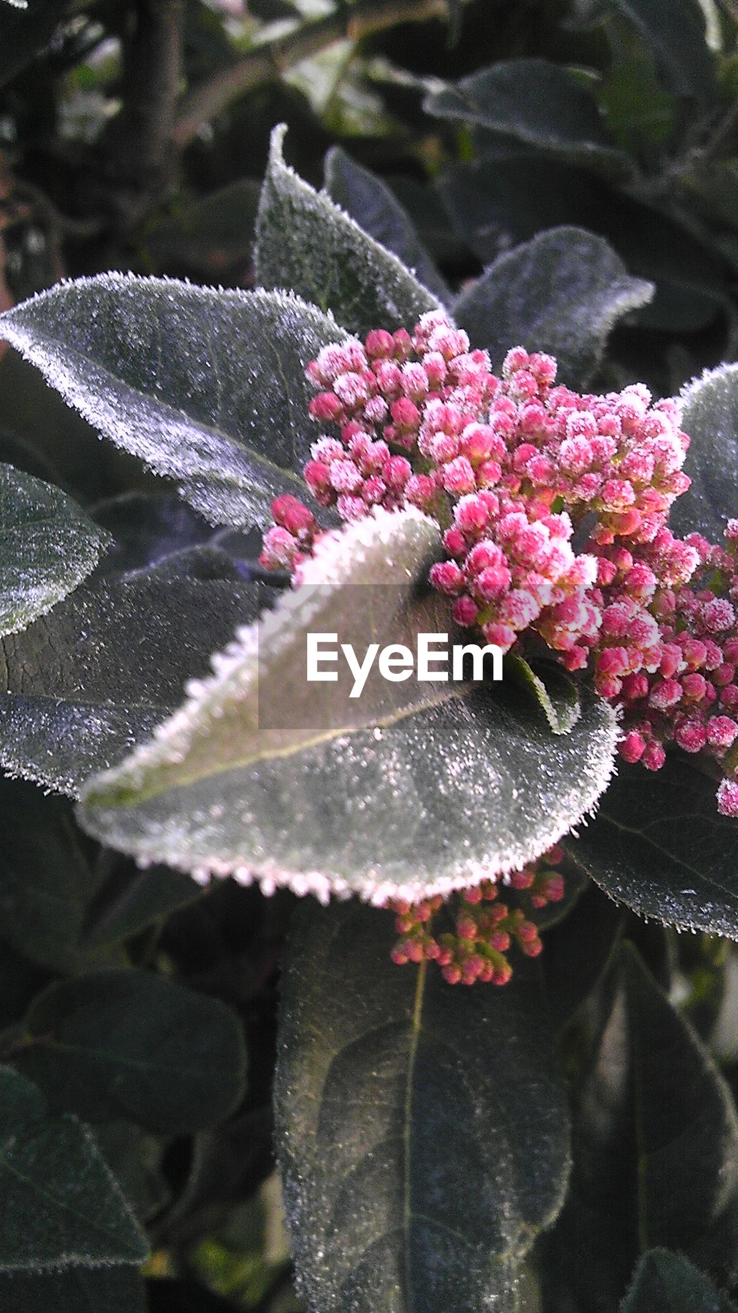 Close-up of frost on flowers and leaves