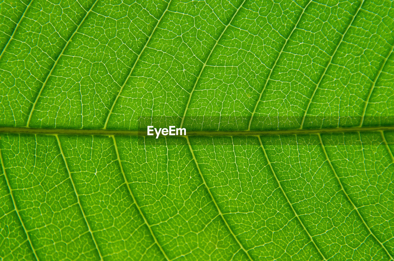 leaf, plant part, leaf vein, full frame, close-up, green color, backgrounds, macro, beauty in nature, nature, no people, extreme close-up, plant, textured, natural pattern, day, pattern, vulnerability, freshness, outdoors, textured effect, purity