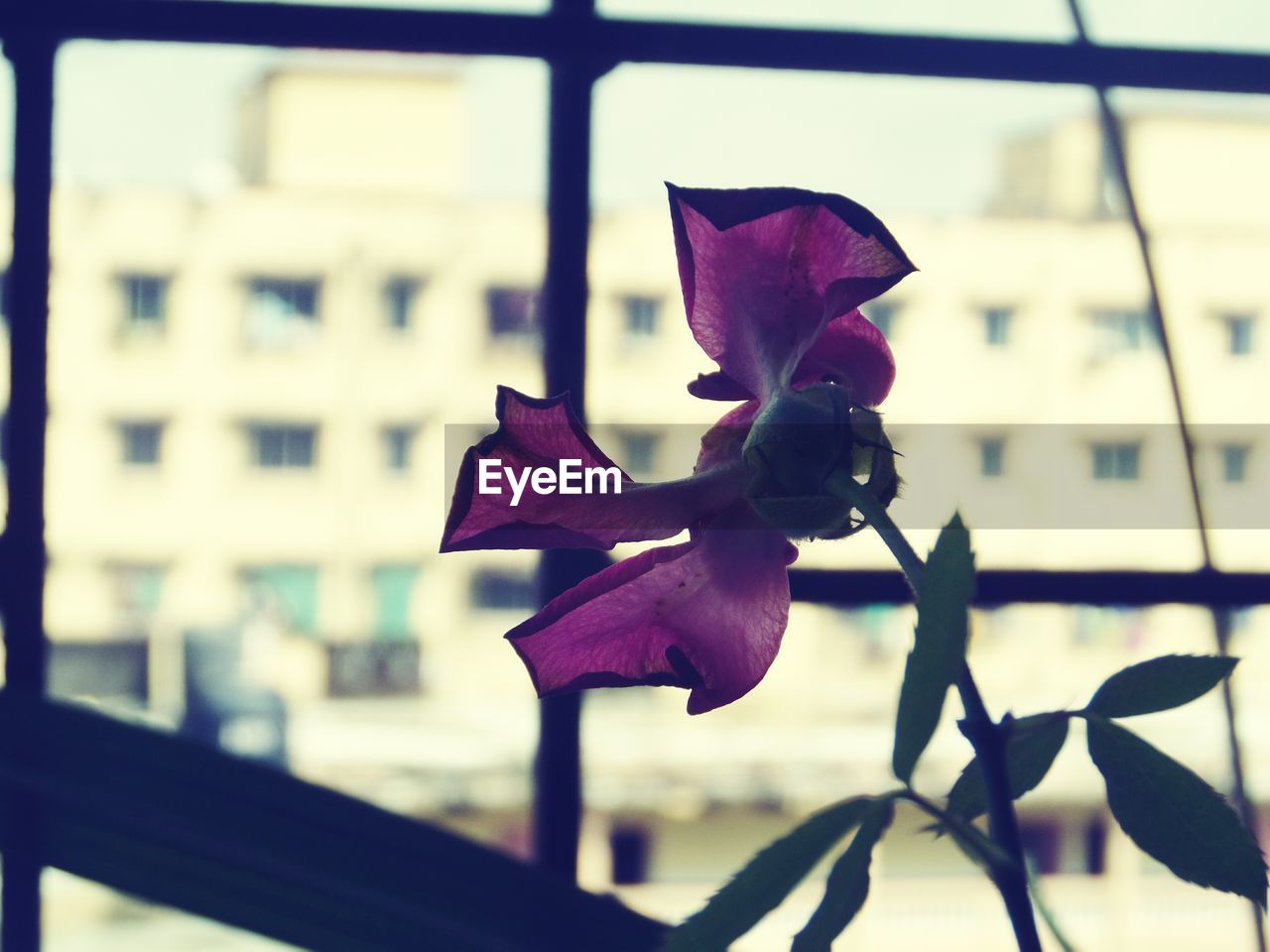 flower, petal, nature, focus on foreground, growth, close-up, beauty in nature, no people, outdoors, fragility, day, blooming, plant, flower head, architecture, freshness, sky