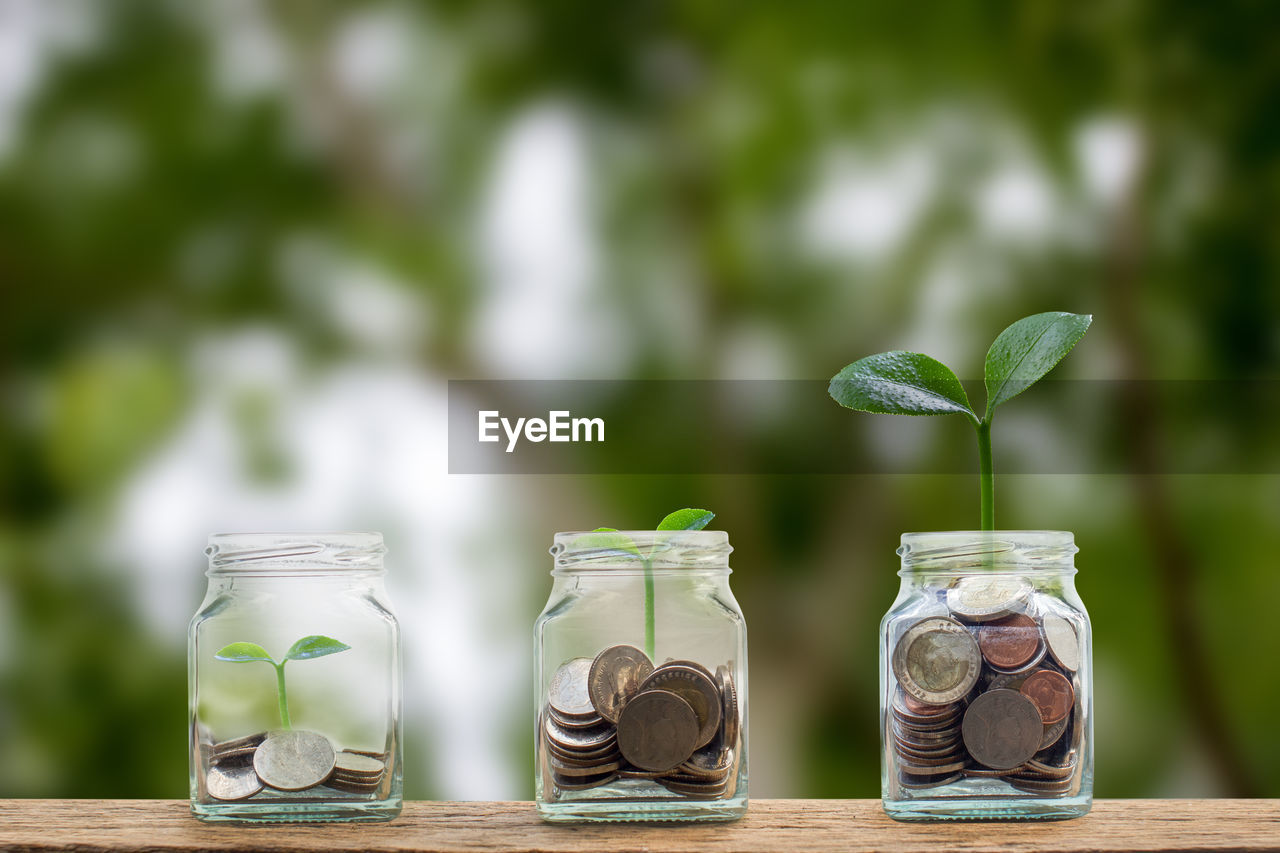 wealth, finance, currency, green color, savings, business, focus on foreground, container, coin, jar, leaf, glass - material, no people, investment, close-up, plant part, table, nature, growth, plant, making money, economy