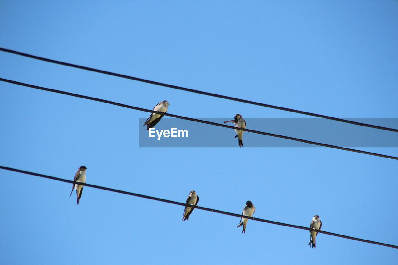 LOW ANGLE VIEW OF BIRD PERCHED AGAINST CLEAR BLUE SKY