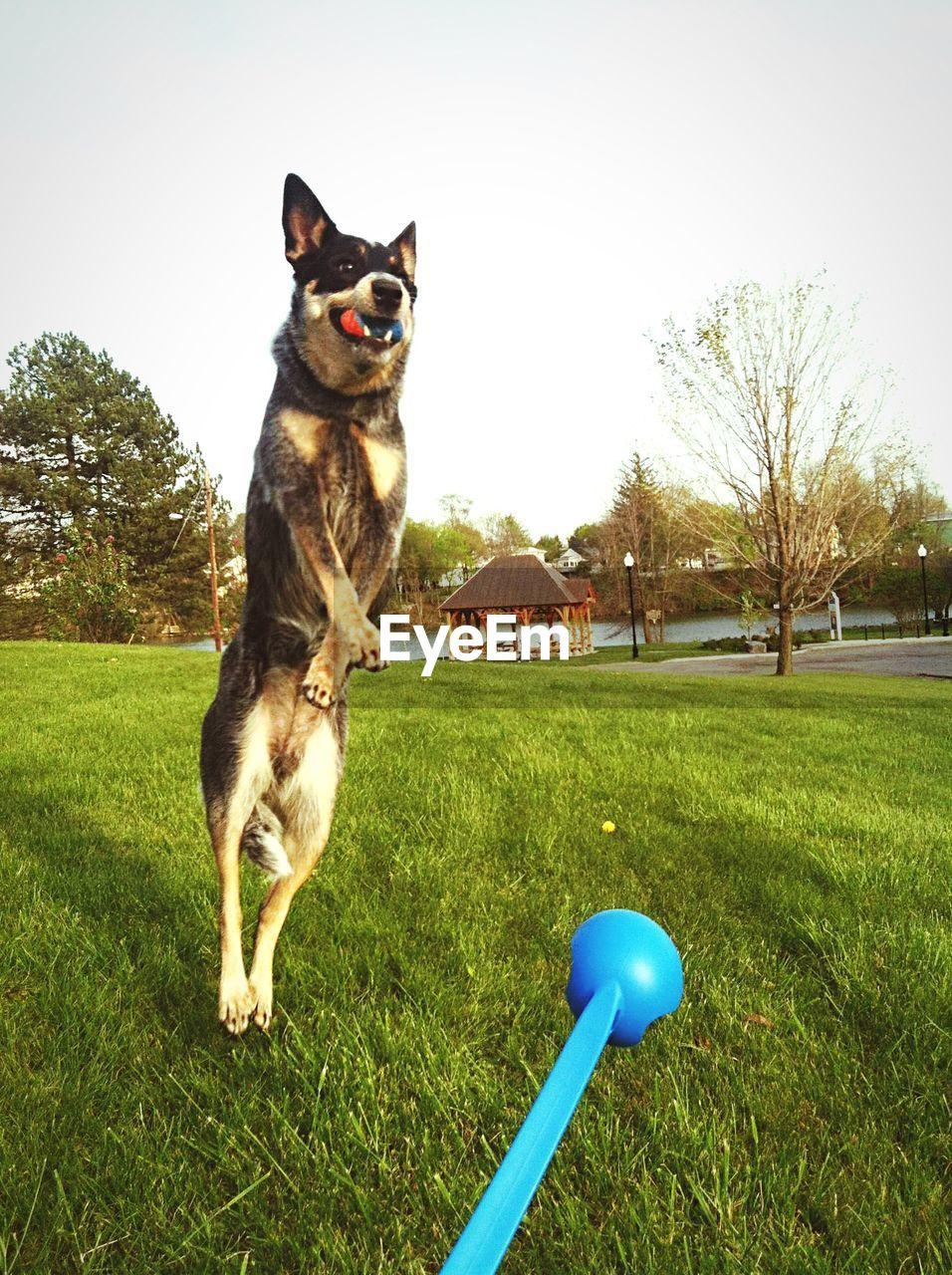 Dog retrieving ball on park against sky