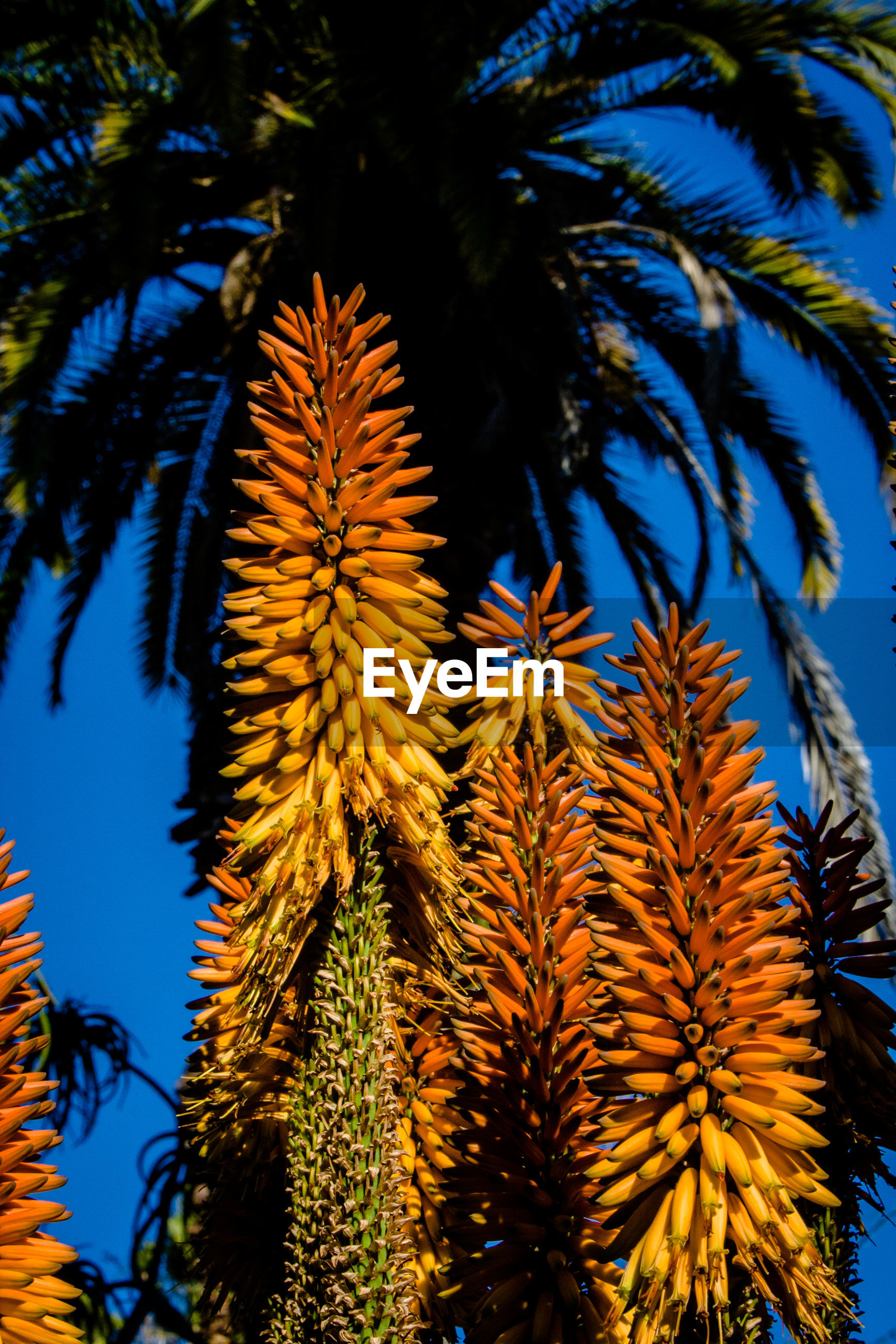 CLOSE-UP OF PALM TREE AGAINST SKY