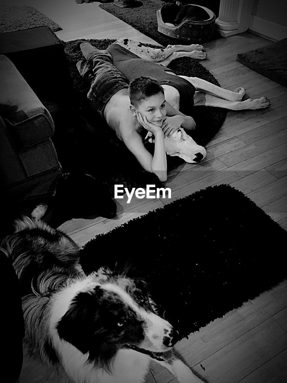 domestic, pets, domestic animals, one person, real people, one animal, leisure activity, lifestyles, full length, vertebrate, mammal, indoors, high angle view, home interior, dog, canine, flooring, pet owner