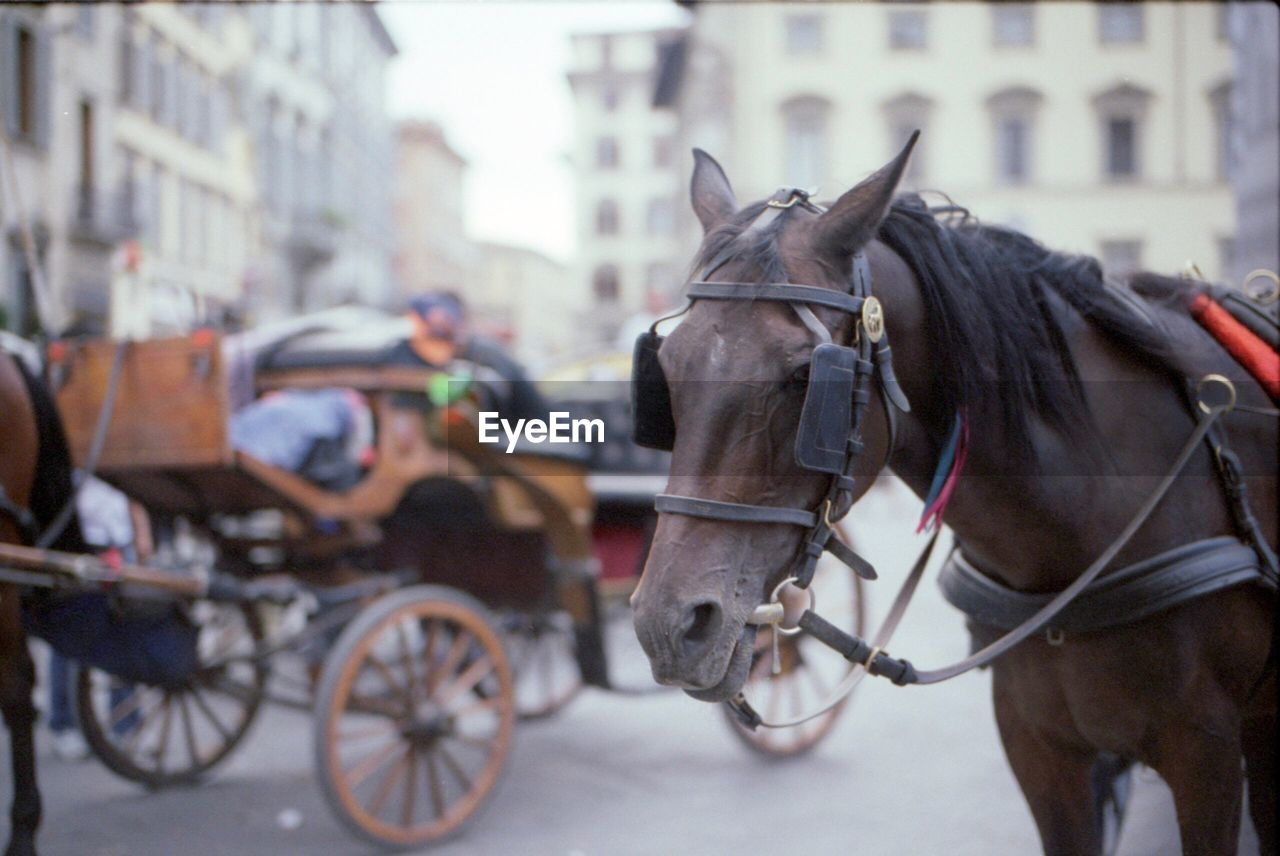 horse, horse cart, horsedrawn, working animal, domestic animals, street, mammal, transportation, animal themes, focus on foreground, mode of transport, city, built structure, building exterior, architecture, outdoors, day, no people