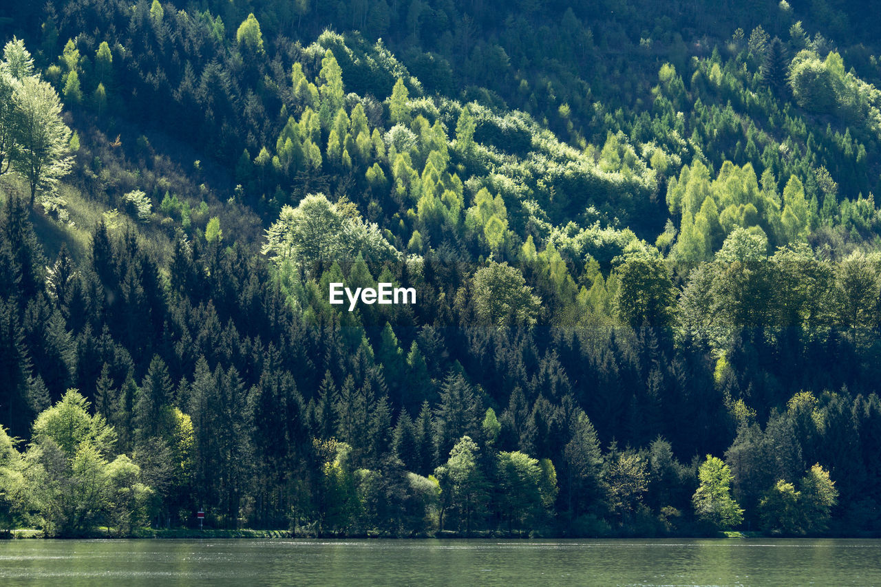 Lake Against Trees In Forest