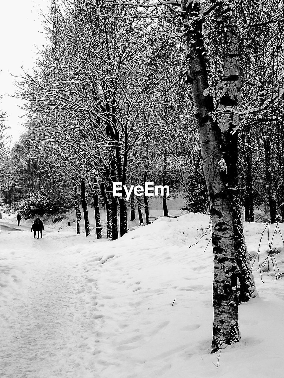snow, winter, tree, cold temperature, plant, covering, land, nature, beauty in nature, bare tree, trunk, tree trunk, day, white color, scenics - nature, field, tranquility, outdoors, environment, treelined