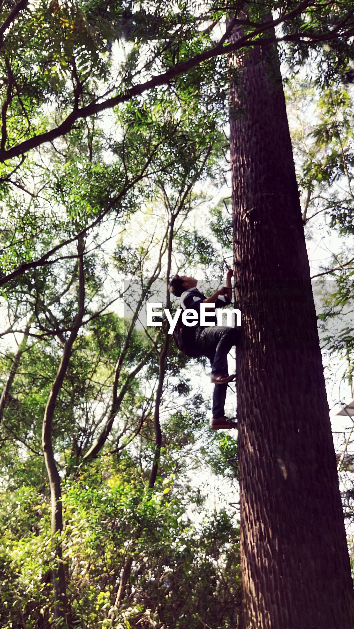 tree, tree trunk, growth, low angle view, branch, leisure activity, lifestyles, day, park - man made space, men, nature, sunlight, outdoors, full length, sculpture, green color, human representation, sky