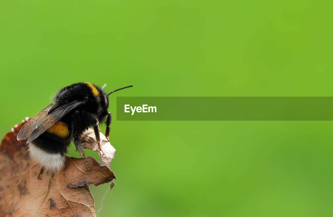 animal themes, animal, one animal, animal wildlife, animals in the wild, copy space, vertebrate, no people, green color, close-up, day, nature, bird, outdoors, focus on foreground, plant, animal body part, mammal, selective focus, zoology, mouth open