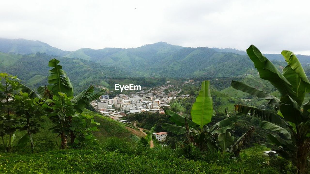 mountain, agriculture, growth, green color, nature, day, mountain range, scenics, architecture, landscape, beauty in nature, outdoors, no people, high angle view, tree, sky, plant, tranquil scene, banana tree, tranquility, built structure, leaf, rural scene, building exterior, terraced field