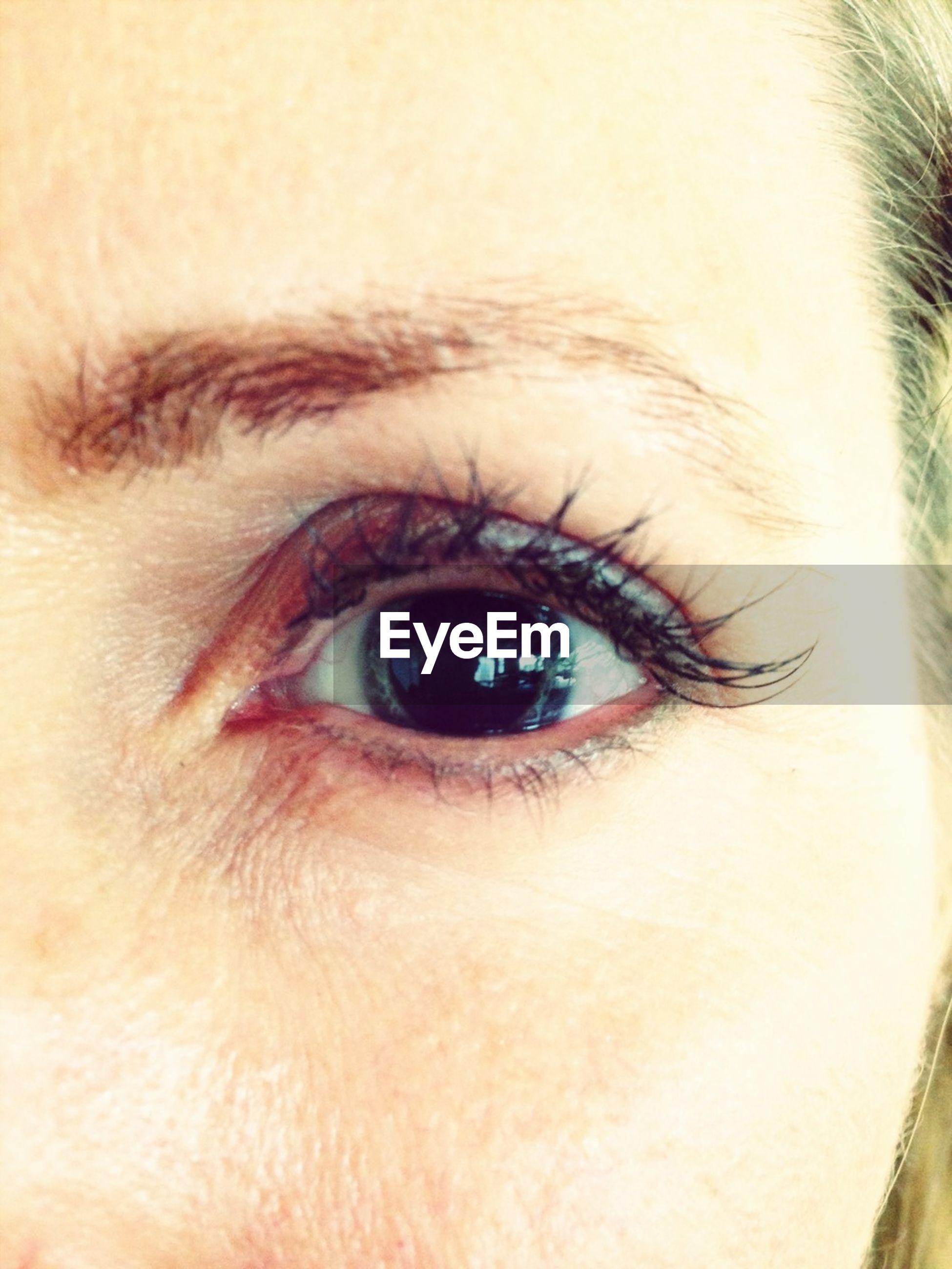 human eye, eyelash, close-up, eyesight, part of, looking at camera, human skin, sensory perception, portrait, human face, iris - eye, extreme close-up, eyeball, extreme close up, eyebrow, lifestyles, headshot