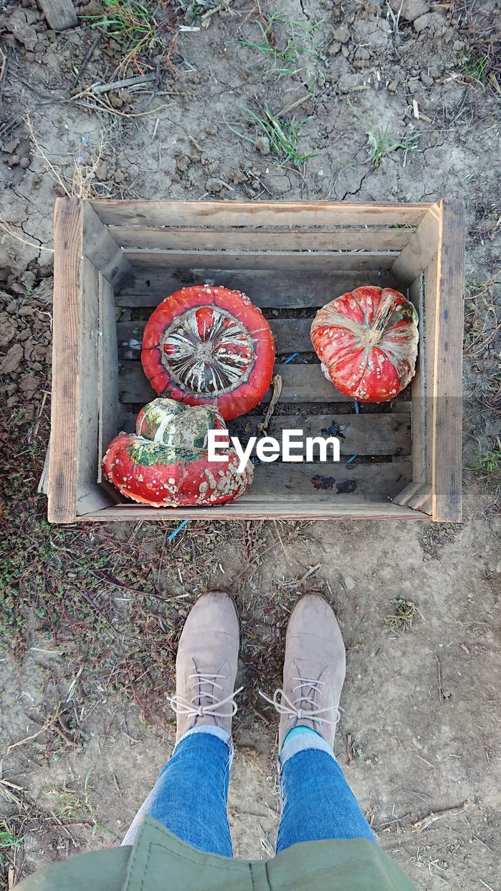 low section, human body part, body part, shoe, personal perspective, one person, high angle view, human leg, standing, real people, day, lifestyles, wood - material, directly above, red, outdoors, unrecognizable person, casual clothing, freshness, human limb, human foot, jeans