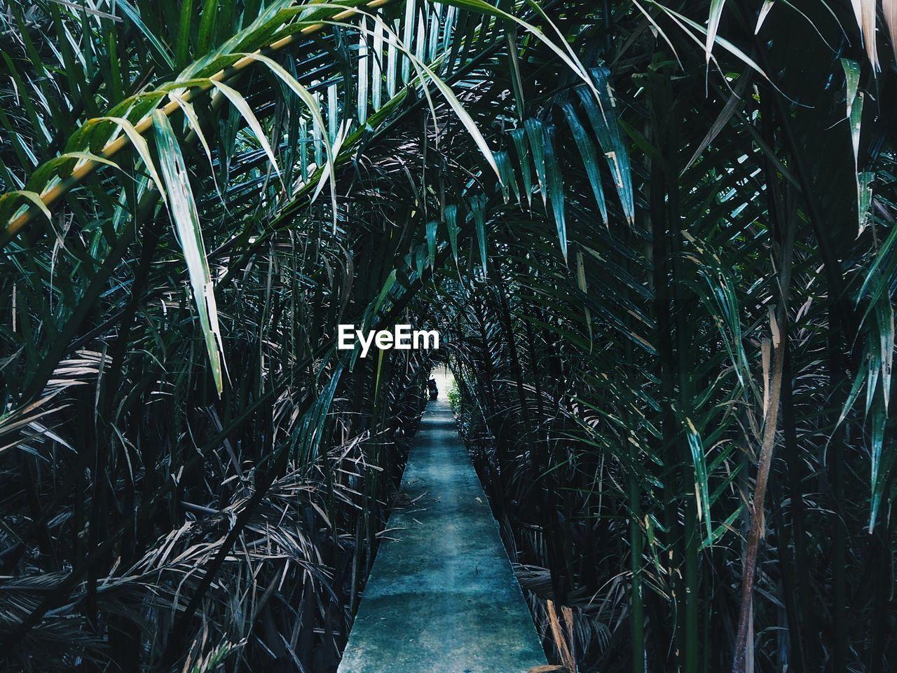 Blank Footpath Amidst Palm Trees