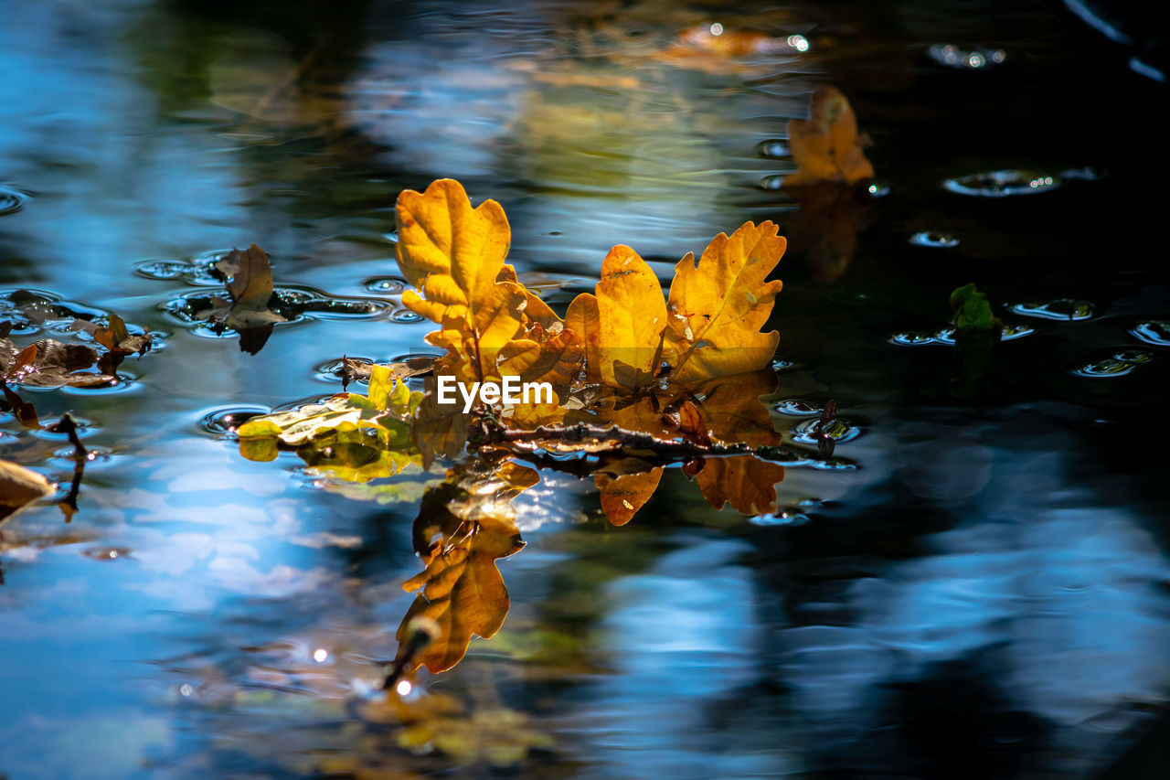 water, lake, beauty in nature, nature, plant, flower, reflection, flowering plant, floating, no people, vulnerability, close-up, floating on water, fragility, day, waterfront, yellow, leaf, plant part, outdoors, leaves, purity
